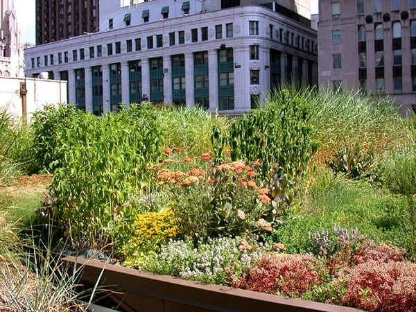 Chicago-City-Hall-Green-Roof_01