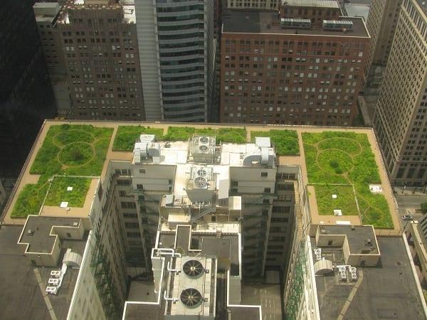 גג עיריית שיקגו
